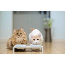 Как выбрать корм для кошек?