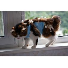Жизнь кошки после стерилизации