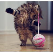 Выбираем игрушки для кошек