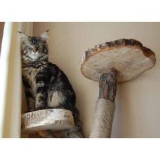 Как выбрать домик для крупной кошки?