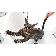 Мытье кошки: как реализовать этот процесс с пользой и комфортом для питомца?